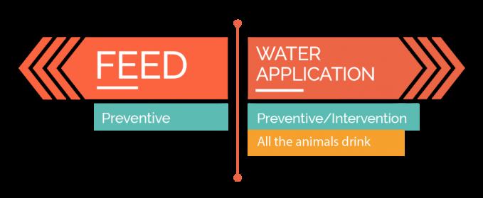 Diagramas-innovabiotics-swine-03
