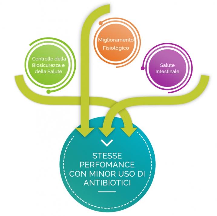 Diagramas-innovabiotics-Avicola 3 ita
